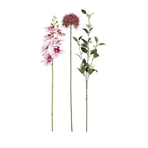 Hoa và cây cảnh